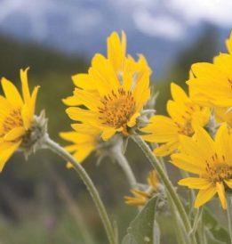 Topul celor 4 plante medicinale împotriva durerilor articulare