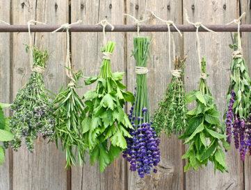 Gyógynövények, amik megkönnyítik a mindennapjaidat
