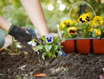 Kertészkedésre fel!