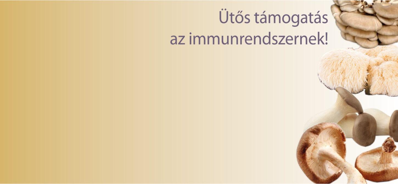 A gyógygombák együttes ereje!